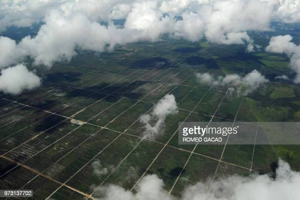 This aerial photograph taken on July 5 shows land cleared for palm oil plantation beside a shrinking natural forest cover seen at right located in...