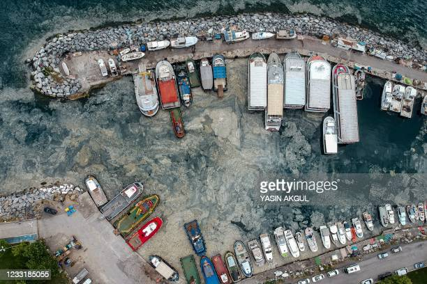 This aerial photograph taken on May 30, 2021 shows mucilage, a thick, viscous fluid produced by phytoplankton, in Turkey's Marmara Sea at a harbor on...