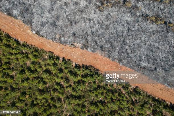 This aerial picture taken on August 7 shows a track delimited burnt trees to a forest in Mugla district as Turkey struggles against its deadliest...