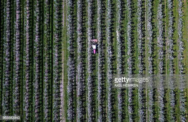 This aerial picture taken with a drone shows a tractor driving through an apple orchard in Haselau, northern Germany, on May 07, 2018. / Germany OUT