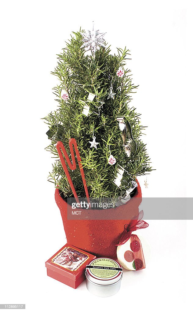 This Christmas Give A Rosemary Topiary Decorated With Ornaments That News Photo Getty Images
