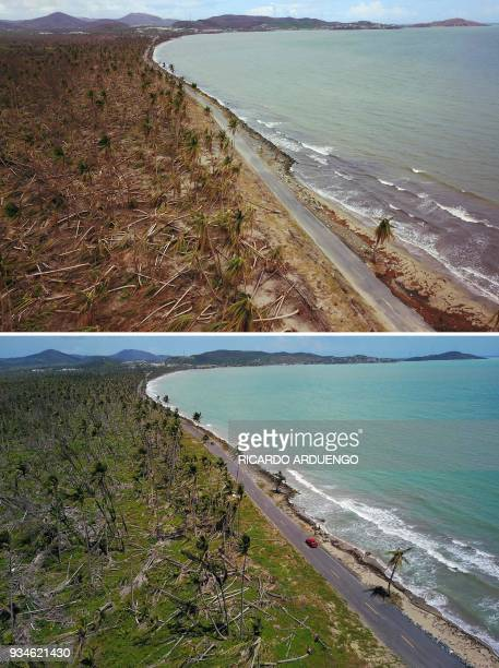 This combo of photos made on March 19 2018 shows downed power line poles and damaged palm trees in the aftermath of Hurricane Maria in Humacao Puerto...