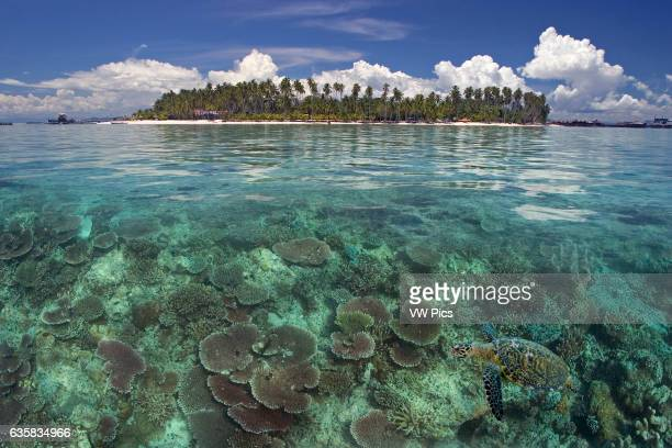 This digital composite includes a hawksbill turtle Eretmochelys imbricata and the island of Mabul Malaysia