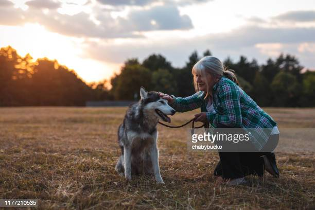 this dog make her happy - husky dog stock pictures, royalty-free photos & images