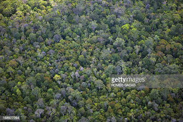 This file aerial photograph taken on June 7, 2012 shows lush tropical forest in the Central Kalimantan province in Indonesia's Borneo island....