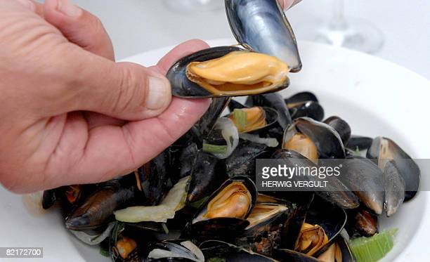 30 Top Mussel Farming Pictures Photos