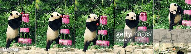 This five image sequence shows giant panda Tai Shan watching an apple fall off the top of his 'cake' during his 4th birthday celebration at the...