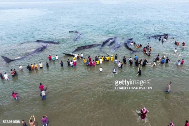 TOPSHOT This general picture taken by a drone camera shows Indonesian officers from Nature Conservation Agency and environmental activists trying to...