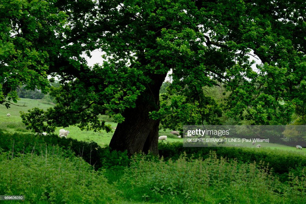 This green and pleasant land : Stock-Foto