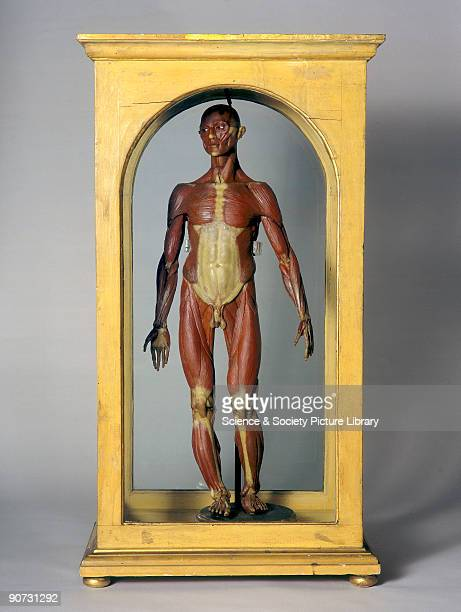 This half-life-size figure showing the body�s muscle system is one of a series of eight made in the 1770s for La Specola zoological museum in...