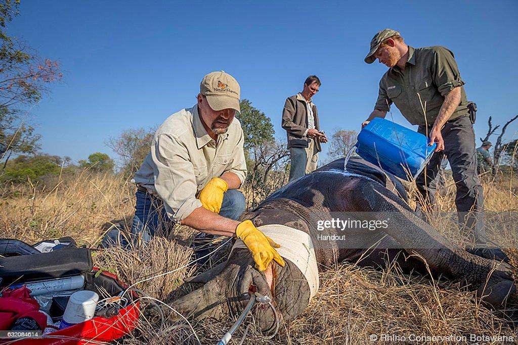 Prince Harry Announced As Patron of Rhino Conservation Botswana : News Photo