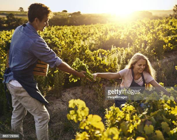 This harvest brought them many rewards