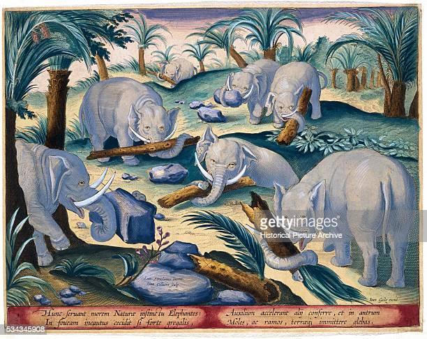 This illustration was published by Phillipus Gallaeus of Amsterdam in the Book Venationes Ferarum Avium Piscium