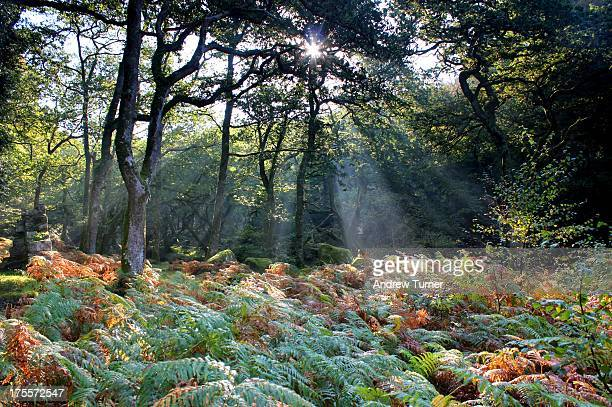 This image of the mixed oak and silver birch woods at Dewerstone near Shaugh Prior was taken on a misty morning back in September. Lighting...