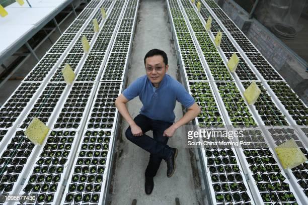 This image shows Michael Ng Waihung of Farm Direct Hong Kong at the Wing Lam Farm Hydroponics in Lau Shui Heung Road Hok Tau Fanling 08APR15...
