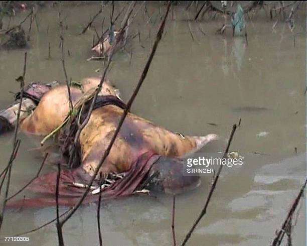 This image taken from a video footage provided to AFP 01 October 2007 by the Democratic Voice of Burma shows the dead body of a buddhist monk...