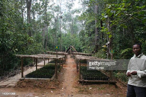 This is a tree nursery run by the Association Mitsinjo reserve eastern Madagascar These nurseries are essential for restoring corridors between...