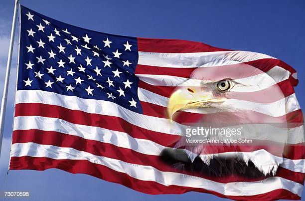 this is an american flag waving in the wind against a blue sky.  an american bald eagle is digitally composited into the right side of the flag into the red and white stripes. this is a digitally created image. - bald eagle with american flag stock pictures, royalty-free photos & images