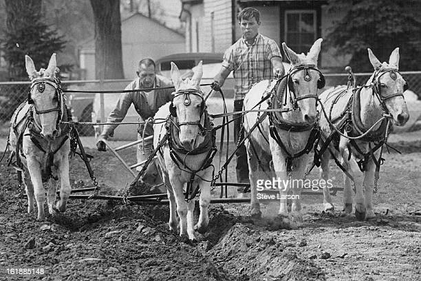 APR 6 1969 APR 7 1969 This is How It Was Done in the Old Days Leo Burggraff left handles the plow while his friend Curt Boswell does the muleskinning...