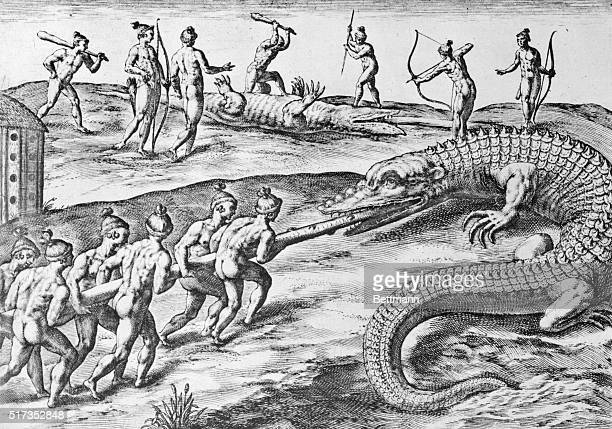 'This is how they attack alligators They take with them a tenfoot pointed pole and when they come upon the monster they push the pole quickly down...