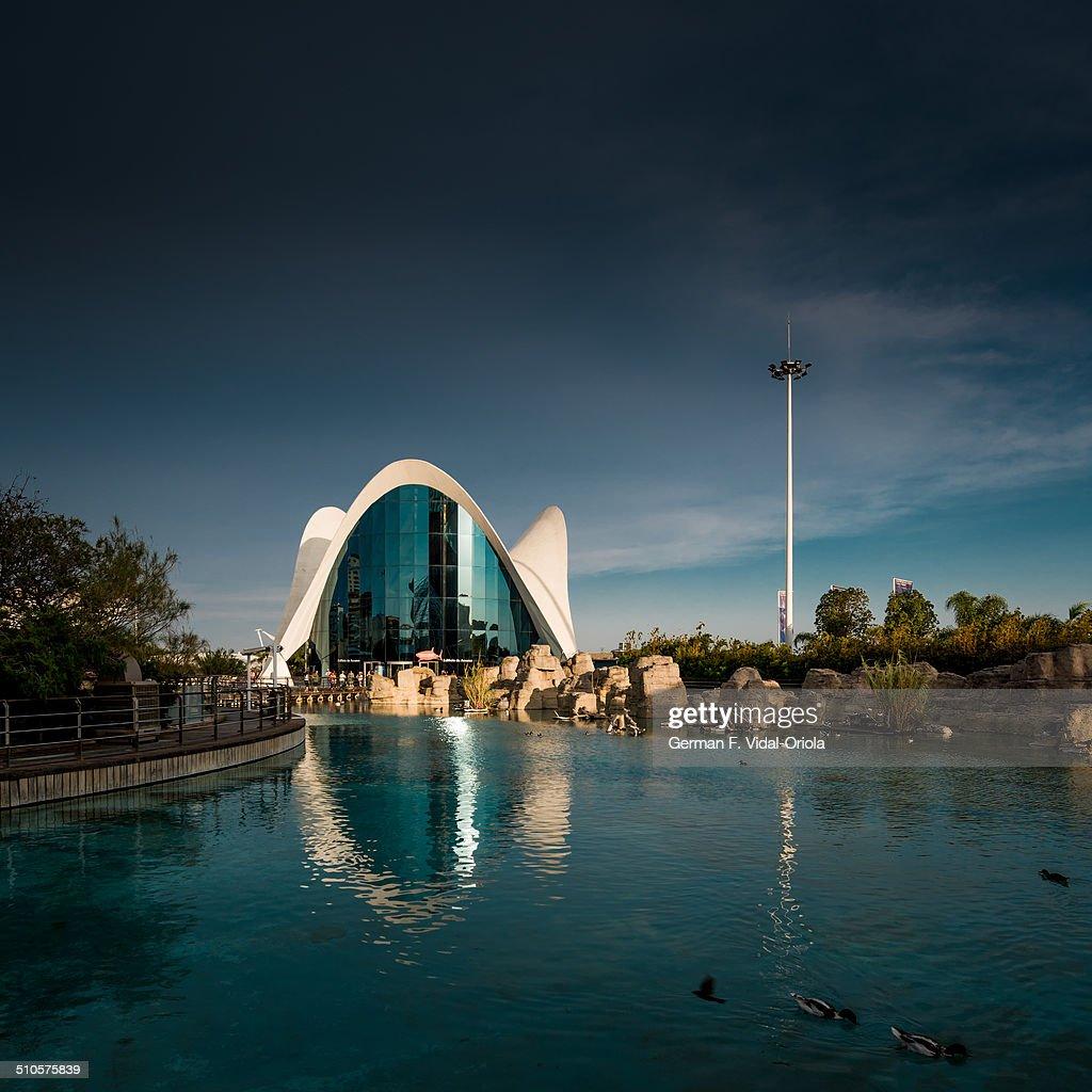 Oceanografic Aquarium in Valencia : News Photo