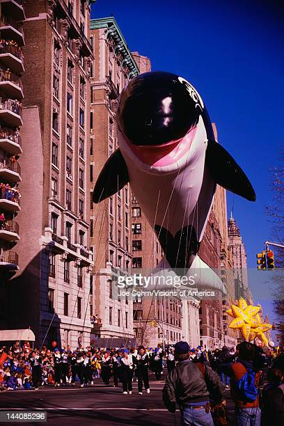 This is the 50th annual Macy's Thanksgiving Day Parade in Central Park There is a giant black and white dolphin balloon coming down the street in the...