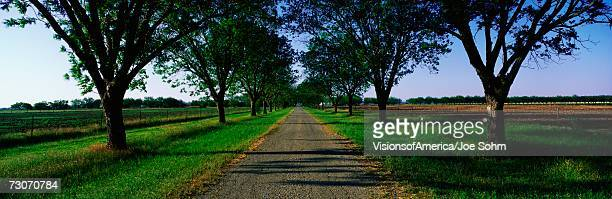 this is the boone hall plantation. the trees are live oaks and spanish moss. (ouercusvirginia) they were planted in 1741. the small gravel road is travels through the center of the trees. - boone hall plantation stock pictures, royalty-free photos & images