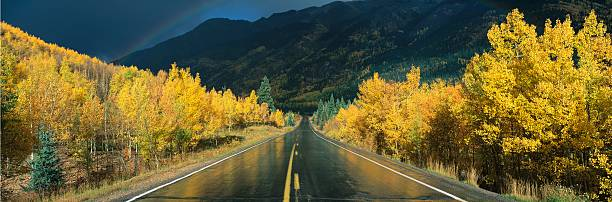 This Is The Million Dollar Highway In The Rain. The Road Is Dark And Wet. There Are Aspen Trees With Gold Leaves On Either Side Of The Road. Wall Art