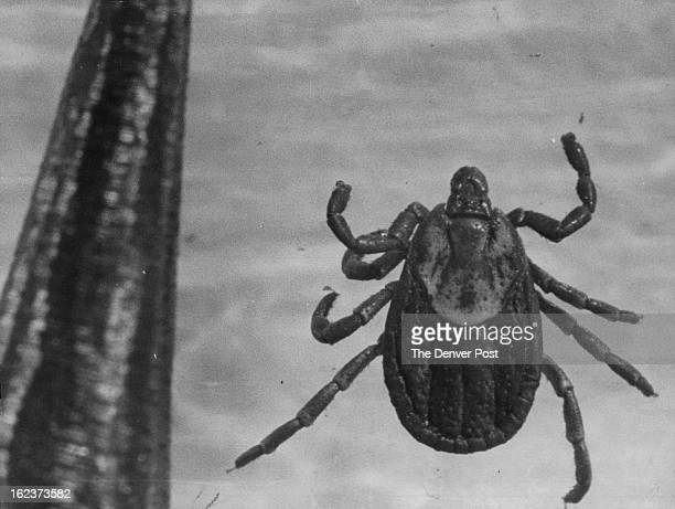 This little insect, ranging from the size of a pinhead to half an inch, has a big bite. He's a wood tick. For an idea of his size, the object at the...