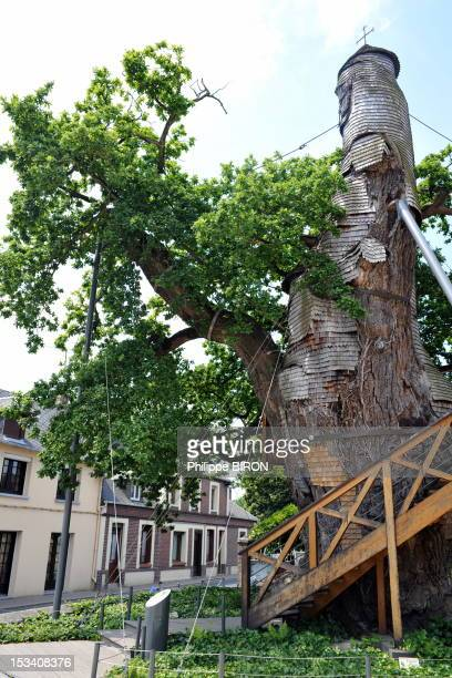 This millennium oak is considered the oldest in France. The tree houses today in its hollowed trunk two superimposed chapels: the Notre Dame de la...