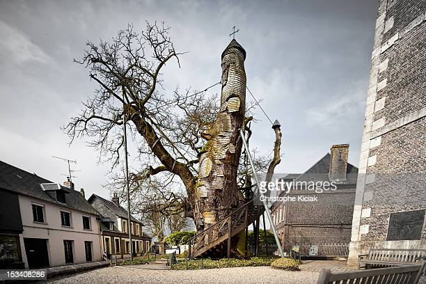 This Oak Tree is located in France, in a Normandie's town called Allouville-Bellefosse. It is one of the oldest tree in the country, with around 1200...