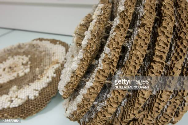 This photo shows a detail of a Asian Hornet nest on September 30 2014 at the Research Institute of Biology of the Insect in Tours central France The...