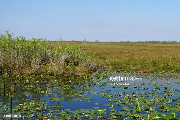 This photo shows a view from the Anhinga Trail in Everglades National Park in Homestead, Florida, on January 16, 2019. - Four weeks into the...
