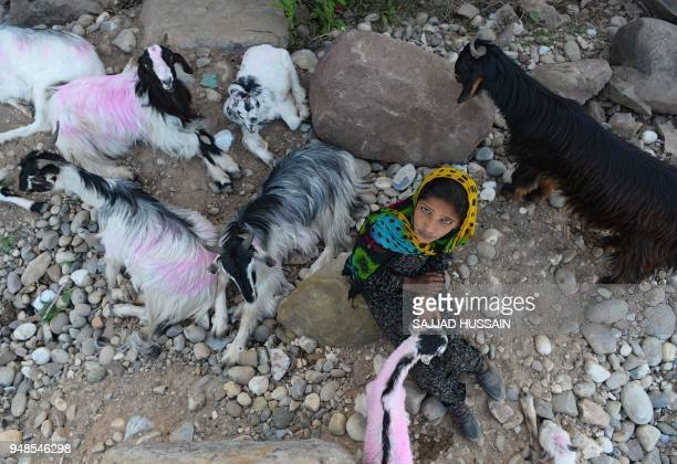 TOPSHOT This photo taken on April 18 2018 shows a Kashmiri Muslim Bakarwal nomad posing for a photograph with livestock at a temporary camp near...