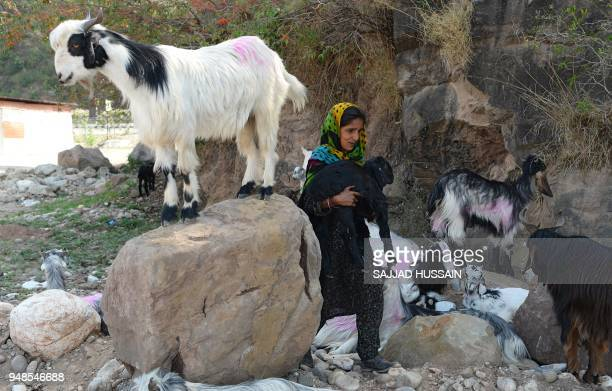 This photo taken on April 18 2018 shows a Kashmiri Muslim Bakarwal nomad carrying a goat through a temporary camp near Udhampur some 72km north of...