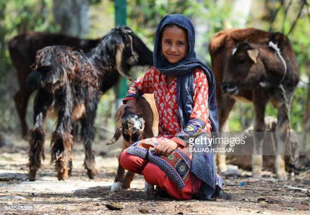 This photo taken on April 18 2018 shows a Kashmiri Muslim Bakarwal nomad posing for a photograph with livestock at a temporary camp near Udhampur...