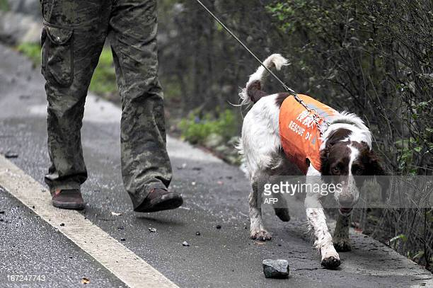 This photo taken on April 22 2013 shows rescuers walking with a rescue dog on the way to Baoxing county in the city of Yaan southwest China's Sichuan...