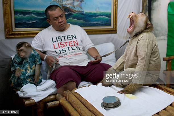 This photo taken on April 22 2015 shows Jamil Ismail sitting with his female pet monkey named 'Shaki' and his male pet monkey named 'JK' both wearing...