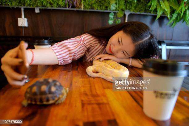 This photo taken on August 18, 2018 shows a customer taking a selfie with a ball python at the Reptile Cafe in Phnom Penh. - For anyone terrified of...