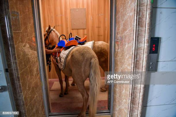 TOPSHOT This photo taken on August 24 2017 shows horses getting in a lift to an equestrian field built on the roof top of a shopping mall by elevator...