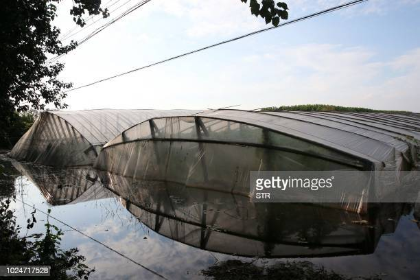 This photo taken on August 27 2018 shows vegetable greenhouses inundated in floodwater caused by Typhoon Rumbia in Shouguang in China's eastern...