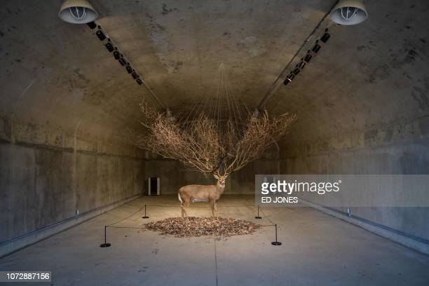 This photo taken on December 11, 2018 shows an art installation by artist Kim Myeongbeom in a decommissioned ammunition store at Camp Greaves, a...