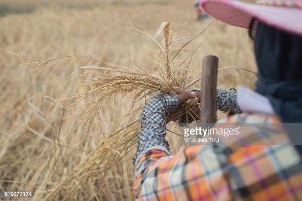 This photo taken on December 27 2017 shows a farmer working in a rice field on the outskirts of Yangon New smartphone apps are providing farmers with...