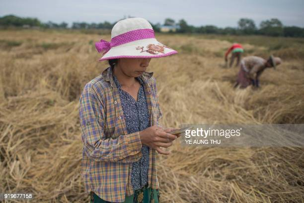 This photo taken on December 27 2017 shows farmer San San Hla using a mobile app as she works in a rice field on the outskirts of Yangon A free app...