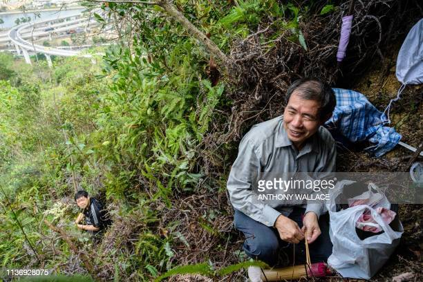 This photo taken on February 14 2019 shows beekeeper Yip Kihok preparing incense sticks to placate bees in a honeyfilled nest as his son Hugo looks...