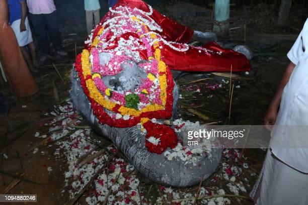 TOPSHOT This photo taken on February 5 2019 shows the body of elderly Indian elephant Dakshayani awarded the title 'Gaja Muthassi' or elephant granny...