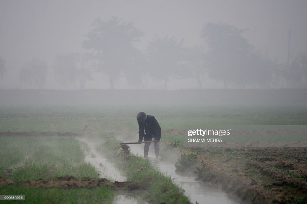 TOPSHOT-INDIA-AGRICULTURE-WINTER : News Photo