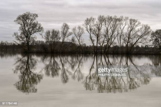 This photo taken on January 29 2018 shows trees reflected in the water along the flooded banks of the Saone River between Tournus and Macon eastern...