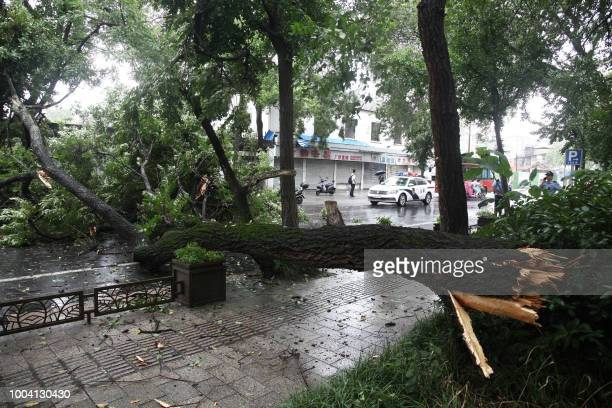 This photo taken on July 22 2018 shows a fallen tree lying across a street as typhoon Ampil approaches in Yangzhou in China's eastern Jiangsu...