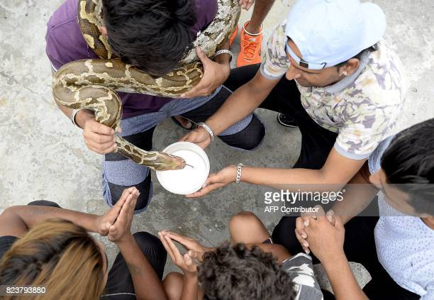 This photo taken on July 27 2017 shows Indian Hindu men offering milk to a python snake in Jalandhar Officially the snake charmers' profession is...